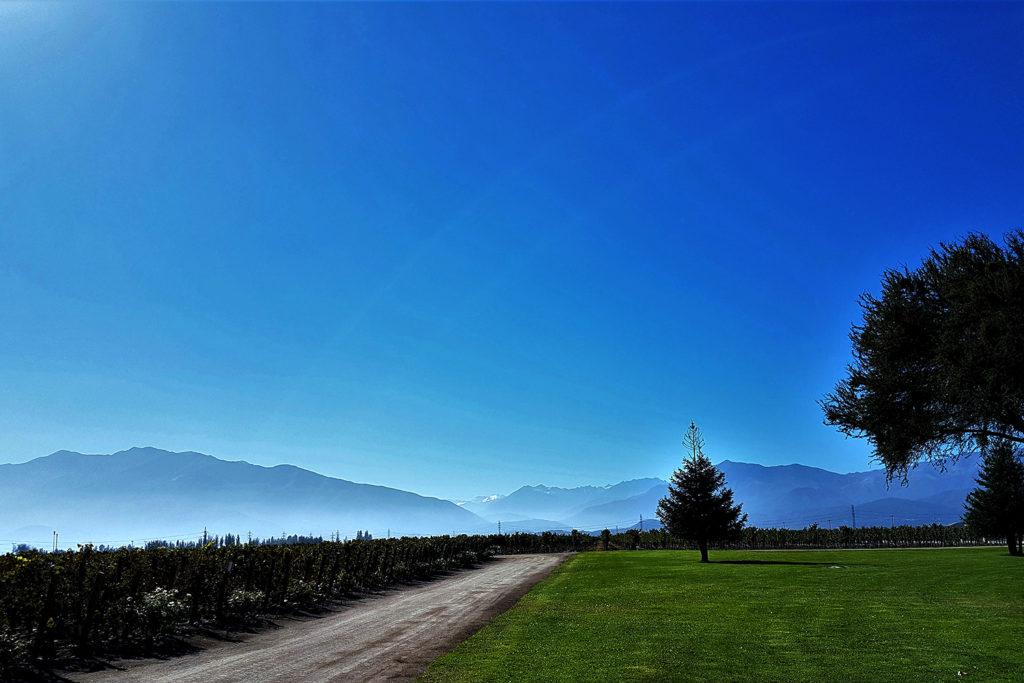 Melhores vinícolas no Chile: Almaviva