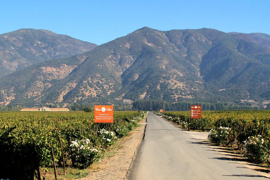 melhores vinícolas no Chile: Casa Silva