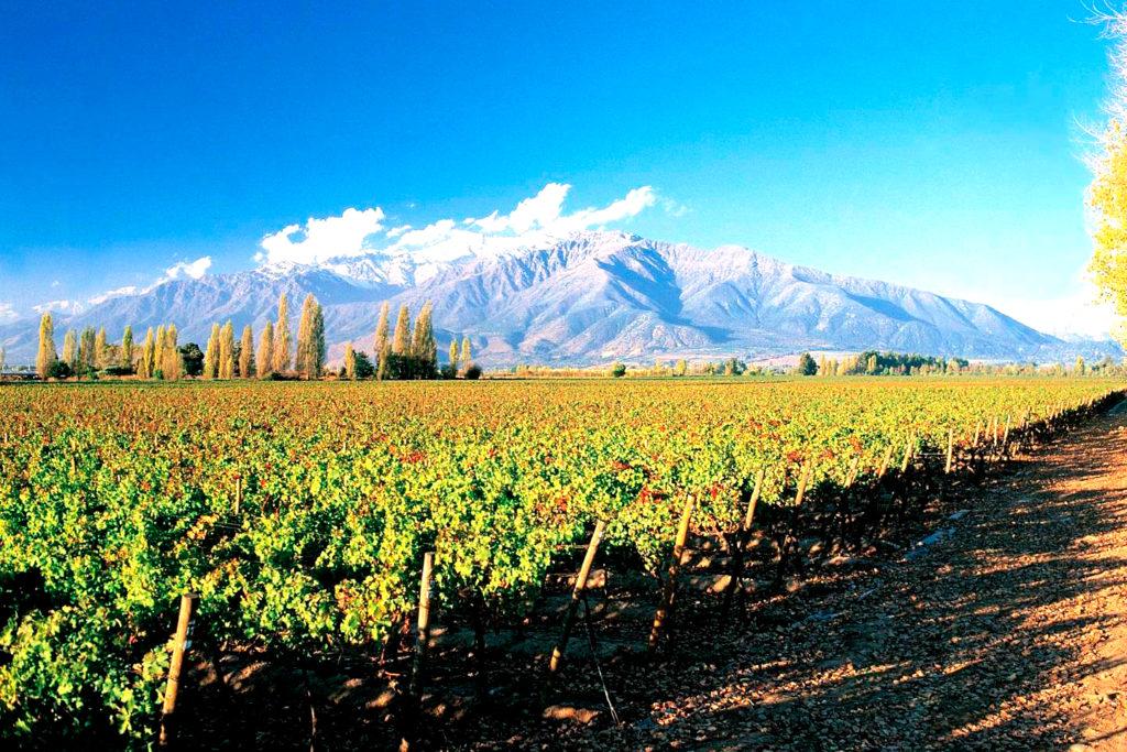Melhores vinícolas no chile: Coursino Macul